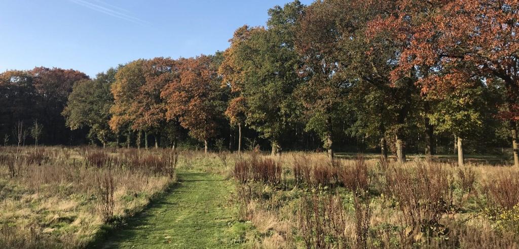 Koningsakker Natuurbegraafplaats heide