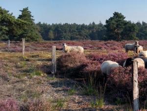 Natuurbegraafplaats Hoogengraven Landschap