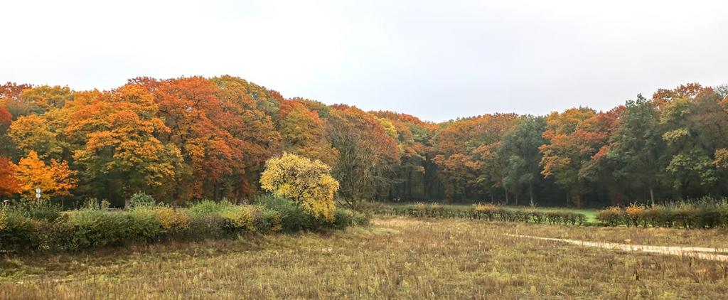 Natuurbegraafplaats Koningsakker
