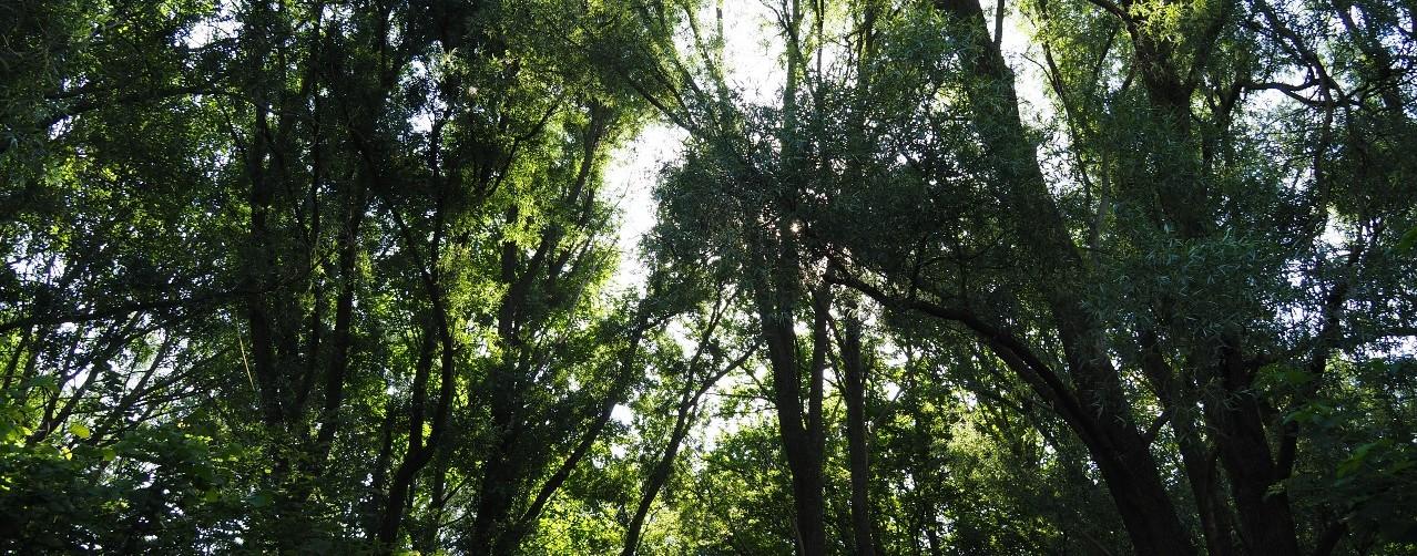 Natuurbegraafplaats Zomerlanden1